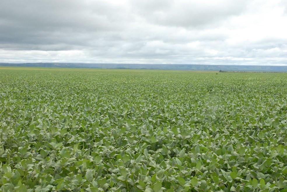 Soja é o principal produto de exportação do Tocantins (Foto: Adapec/Divulgação)