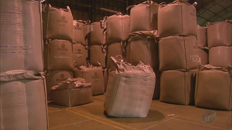 Saca de café teve aumento de R$ 16,00 e está cotada em R$ 461,00 (Foto: José Augusto Júnior/EPTV)