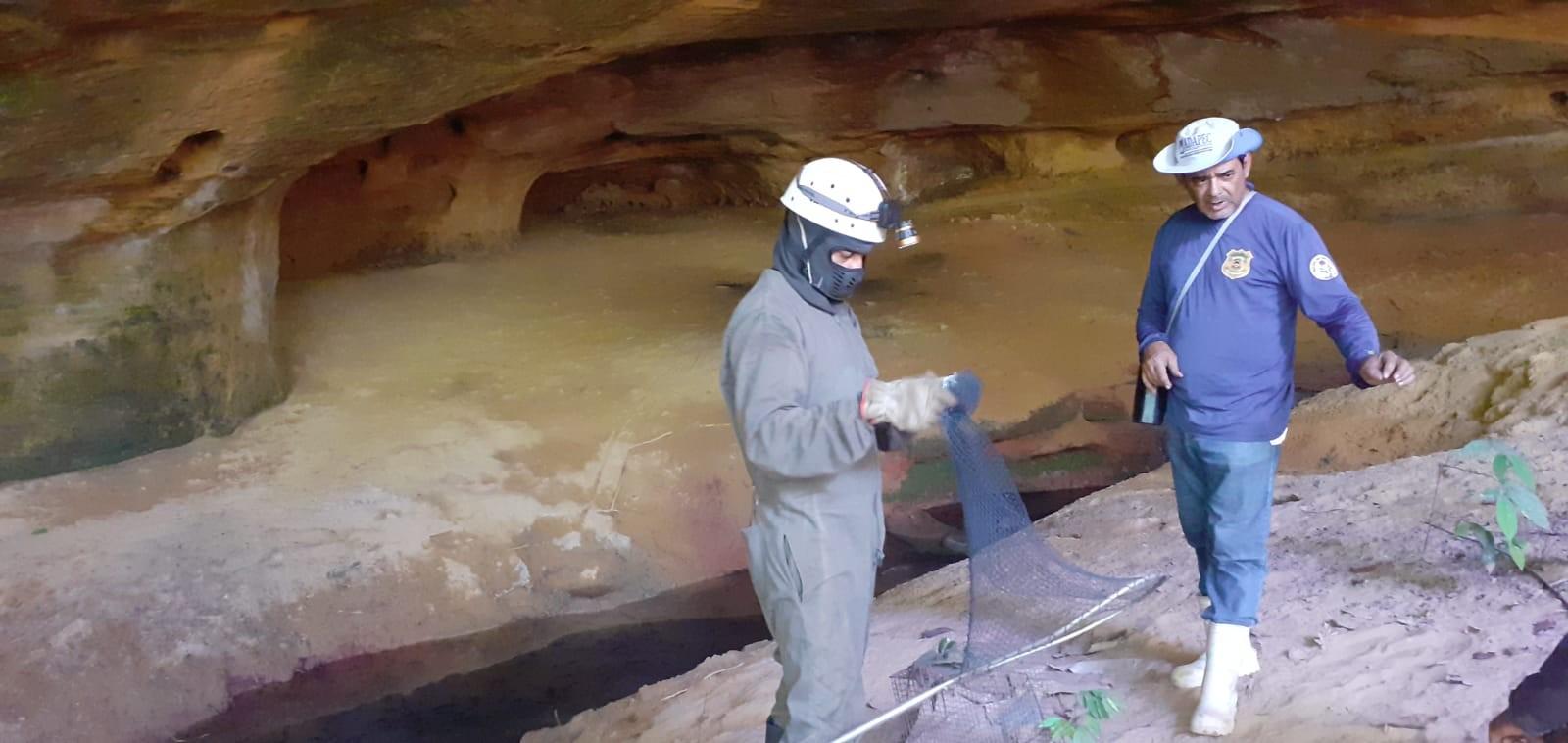 Morcegos-vampiros são capturados após ataques a indígenas em aldeia do Tocantins