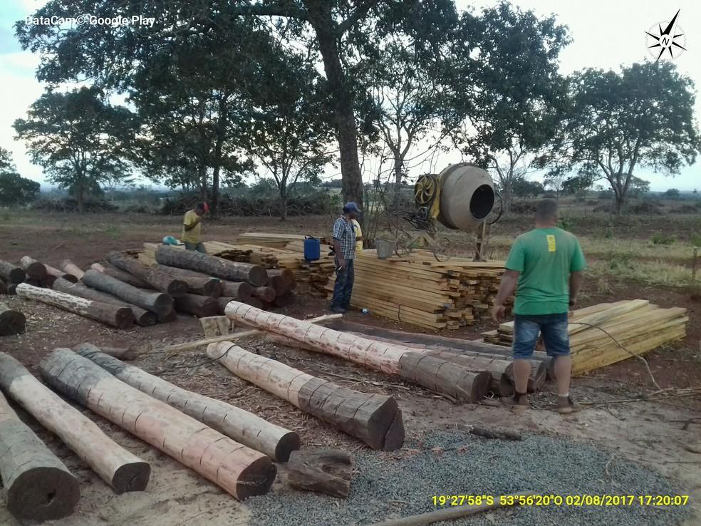 Variedades de corte da madeira apreendida (Foto: Ibama/Divulgação)
