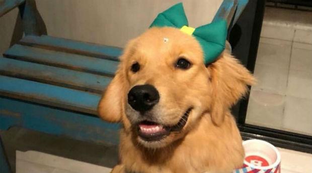 Pet cachorro (Foto: Divulgação)