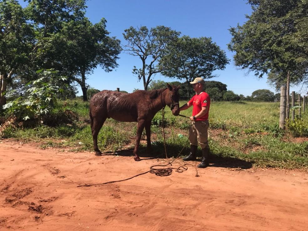 Bombeiro com cavalo resgatado de fossa em Campo Grande (Foto: Ellen Rocha/TV Morena)