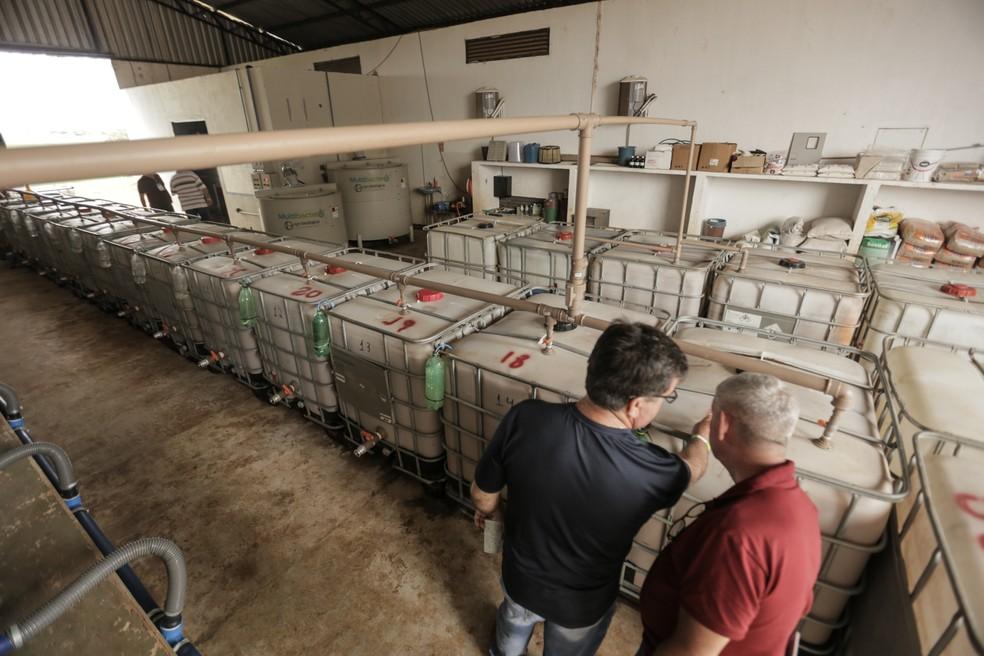 Biofábrica onde Rogério reproduz bactérias e microrganismos para serem aplicados na lavoura — Foto: Eliane de Castro/Divulgação