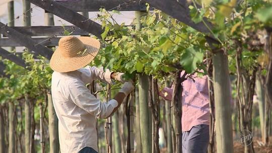 Programa de Louveira incentiva produtores e aumenta ocupação na zona rural