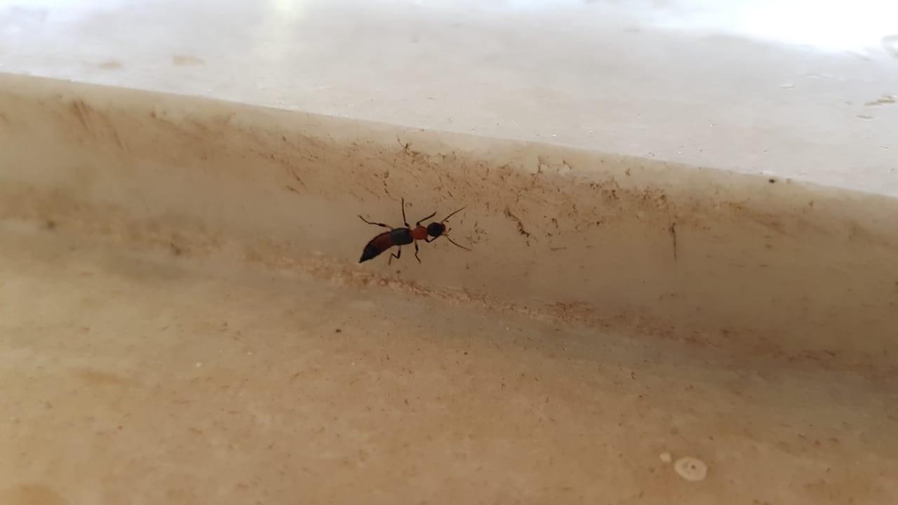 Fim do período chuvoso e aumento de temperatura marcam temporada de potós no Piauí