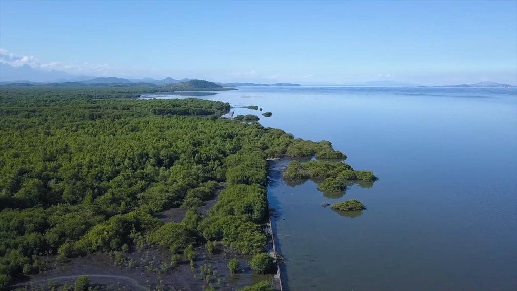 manguezais — Foto: Globo Repórter/ Reprodução