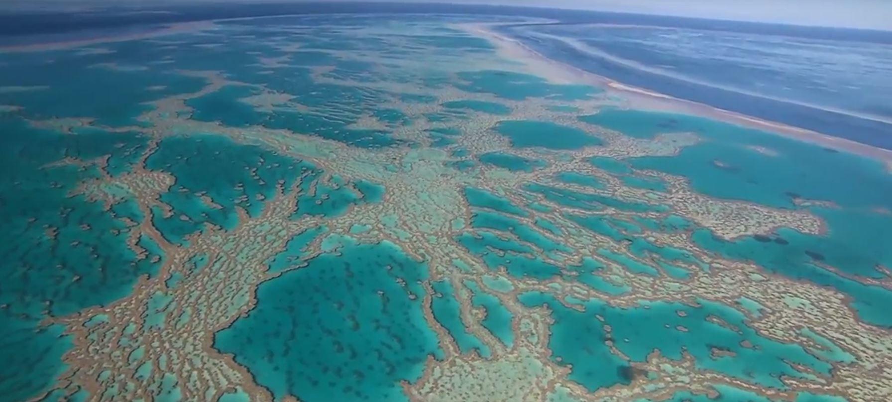 Grande Barreira Barreira de Corais australiana apresenta sinais de recuperação. (Foto: Reprodução / YouTube)