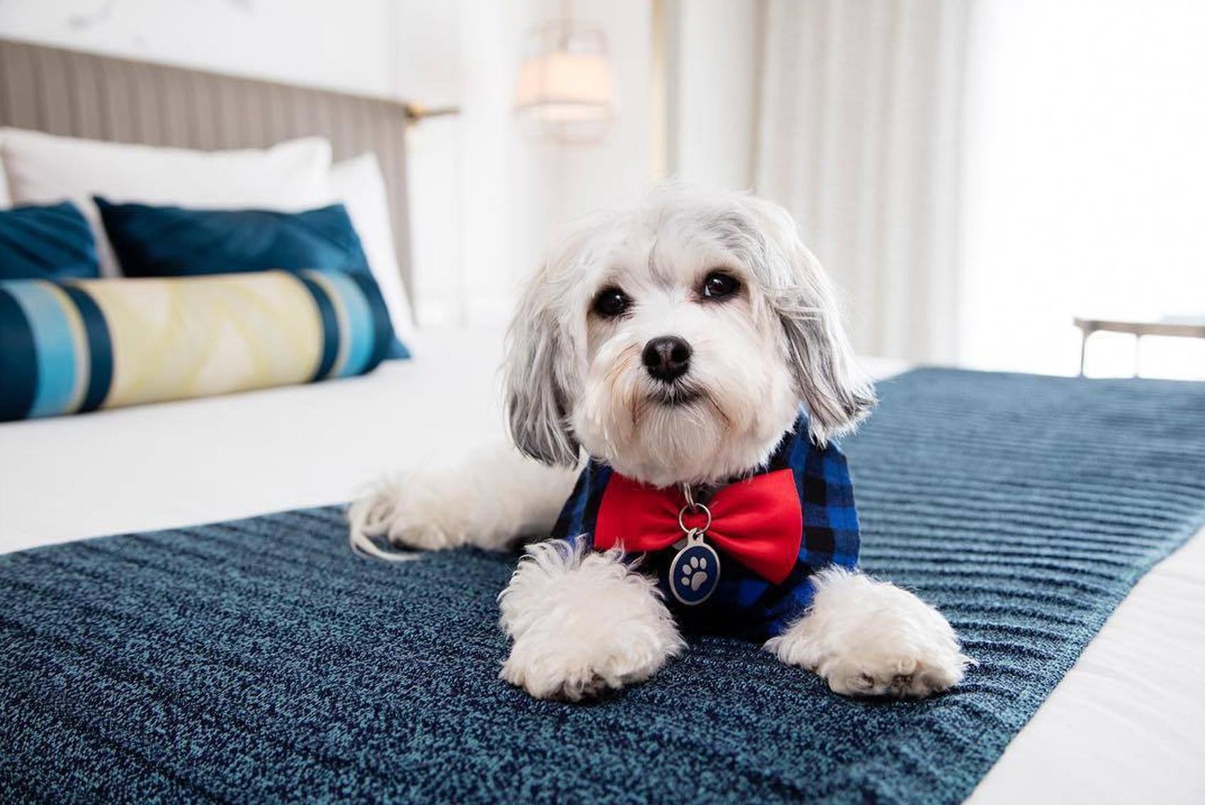 Hotel oferece visita canina a hóspedes solitários na Califórnia