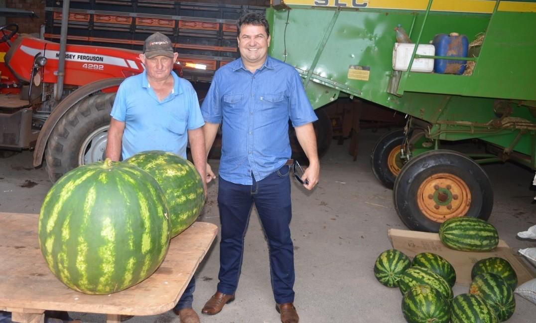 Agricultor colhe melancia de 30 kg em Coronel Barros: 'É adubação e um segredinho'