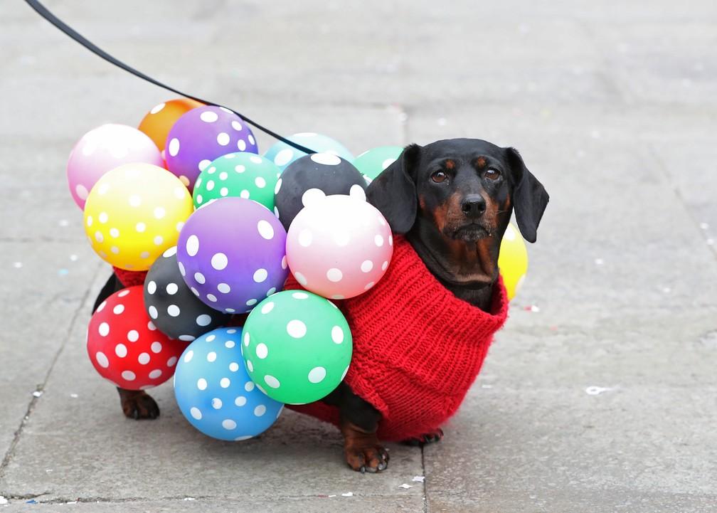 Cachorro fantasiado participa dos desfiles de carnaval em Veneza, na Itália. — Foto: Yves Herman/Reuters