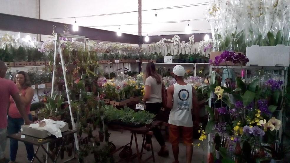 Exposição tem atraído cada vez mais visitantes (Foto: Fábio Borborema/Arquivo pessoal)