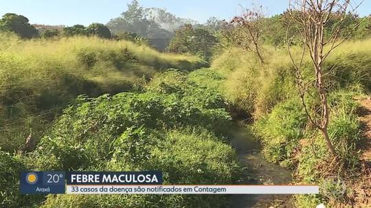 Minas Gerais confirma 5 mortes por febre maculosa em 2019