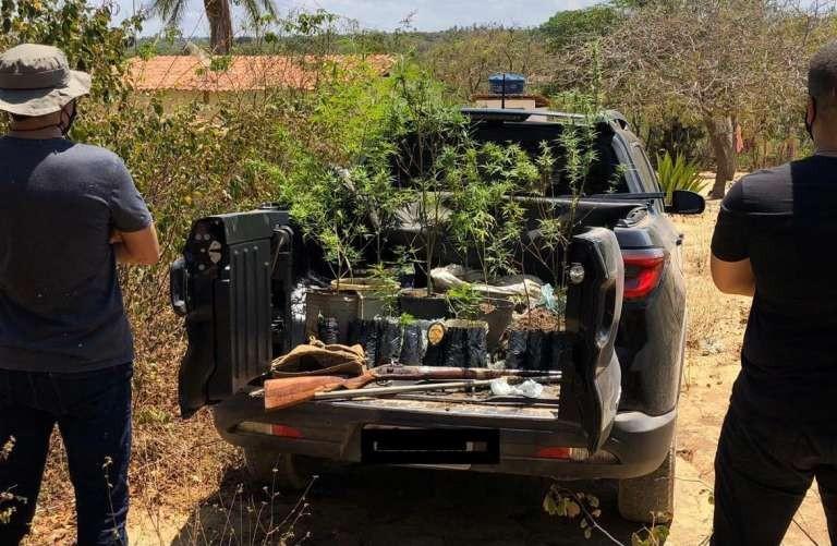 Polícia prende suspeito com plantação de maconha e espingarda em Jardim, município no sul do Ceará