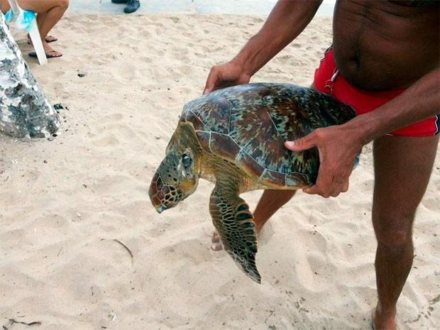 Tartaruga foi encontrada na manhã desta segunda (3) na praia de Ponta Negra, em Natal (Fot André Henrique silva)