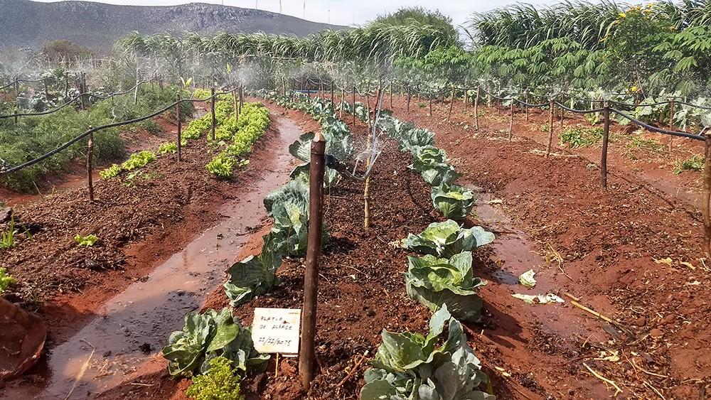 No Conjunto Eólico Campo Largo, no interior da Bahia, a ENGIE garante o fornecimento de água de poços, de forma a estimular a produção agrícola (Foto: Divulgação)