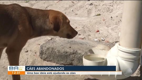 Moradores se unem para alimentar cães de rua em Teixeira de Freiras, no extremo sul