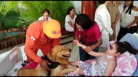 Menina de 6 anos que vive em hospital toca em cachorro pela primeira vez em Uberaba; veja vídeo