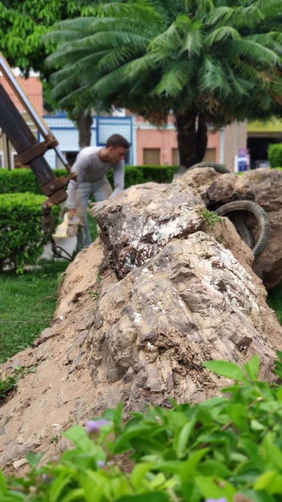 Fósseis estão expostos em praça na cidade de Santana do Cariri. — Foto: Divulgação/Urca