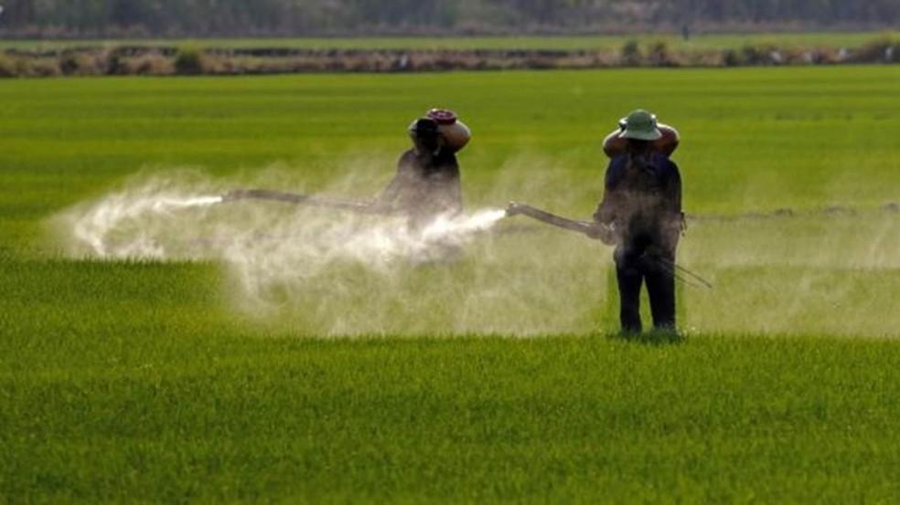 Agrotóxicos podem afetar polinizadores e podem prejudicar lavouras vizinhas que não são resistentes a eles — Foto: Getty Images
