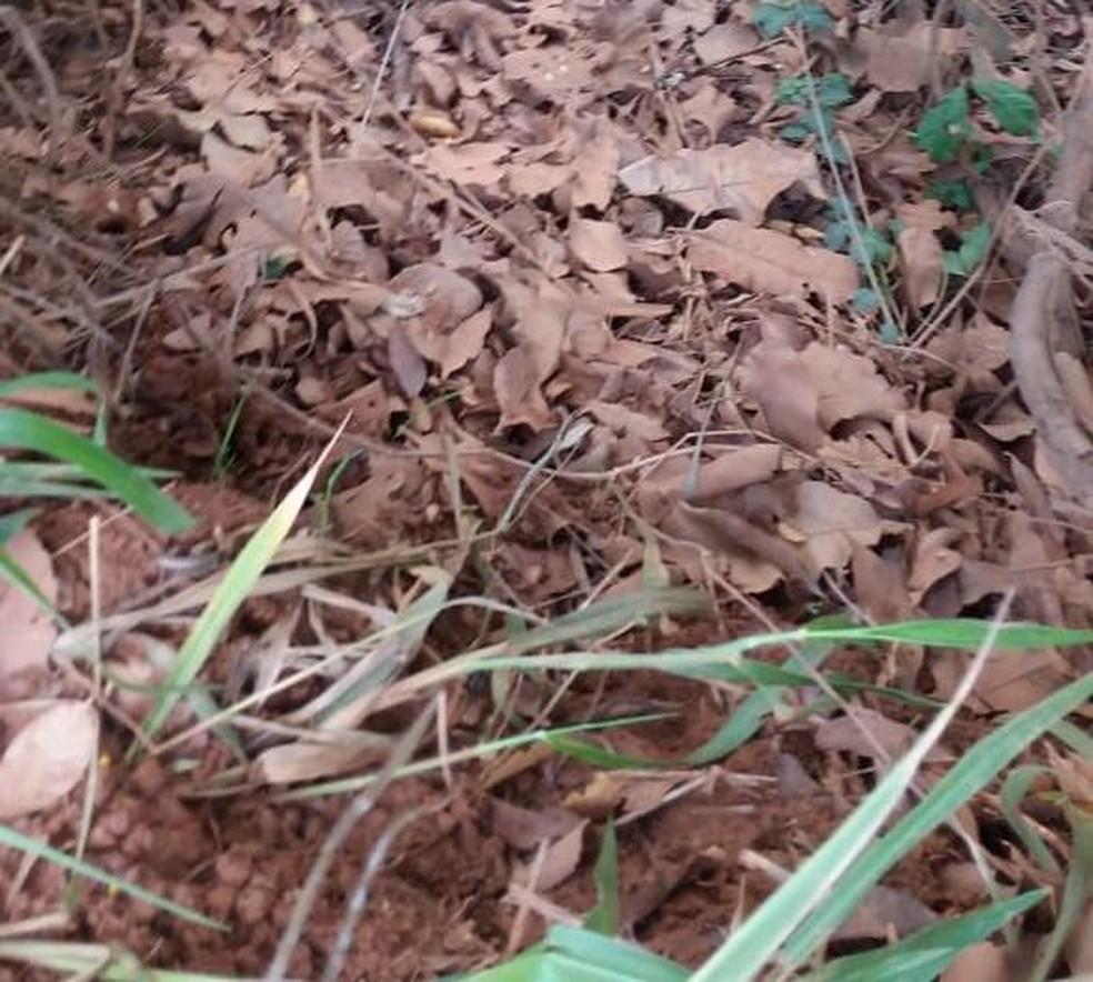 Corpo foi encontrado na zona rural de Lagoa da Confusão — Foto: Divulgação