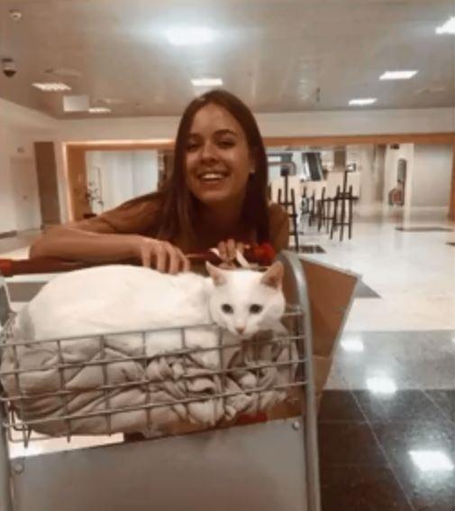Saiba como transportar cães e gatos em viagens thumbnail