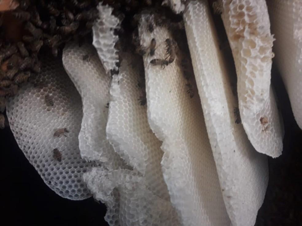Abelhas estavam dentro da parede de um quarto em uma casa de Rio Bonito, no RJ — Foto: Prefeitura de Rio Bonito/ Divulgação