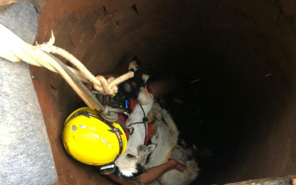 Cabra é resgatada após cair em cisterna, em Minaçu, Goiás — Foto: Divulgação/Corpo de Bombeiros