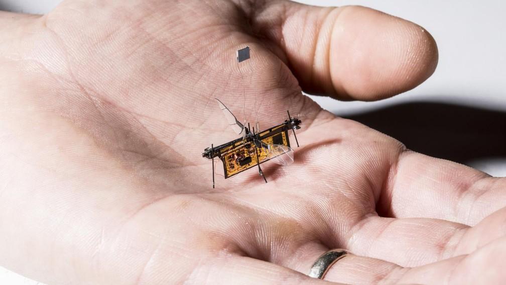 RoboFly é o primeiro robô voador sem fios que tem o tamanho de um inseto (Foto: Mark Stone/Universidade de Washington)