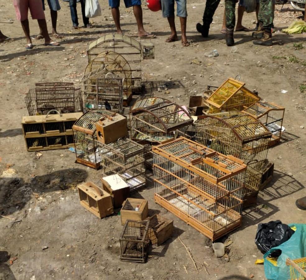 Policiais apreenderam 159 animais silvestres em Feira de Santana  — Foto: Divulgação / SSP-BA