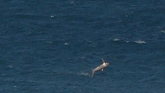 Presença de tubarões paralisa bateria de Filipe Toledo em Jeffreys Bay