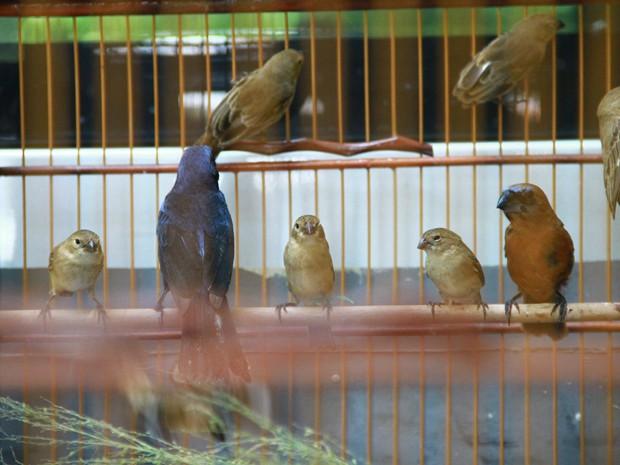 Aves estavam na casa do suspeito, em Bayeux, na Grande João Pessoa (Foto: Walter Paparazzo/G1)