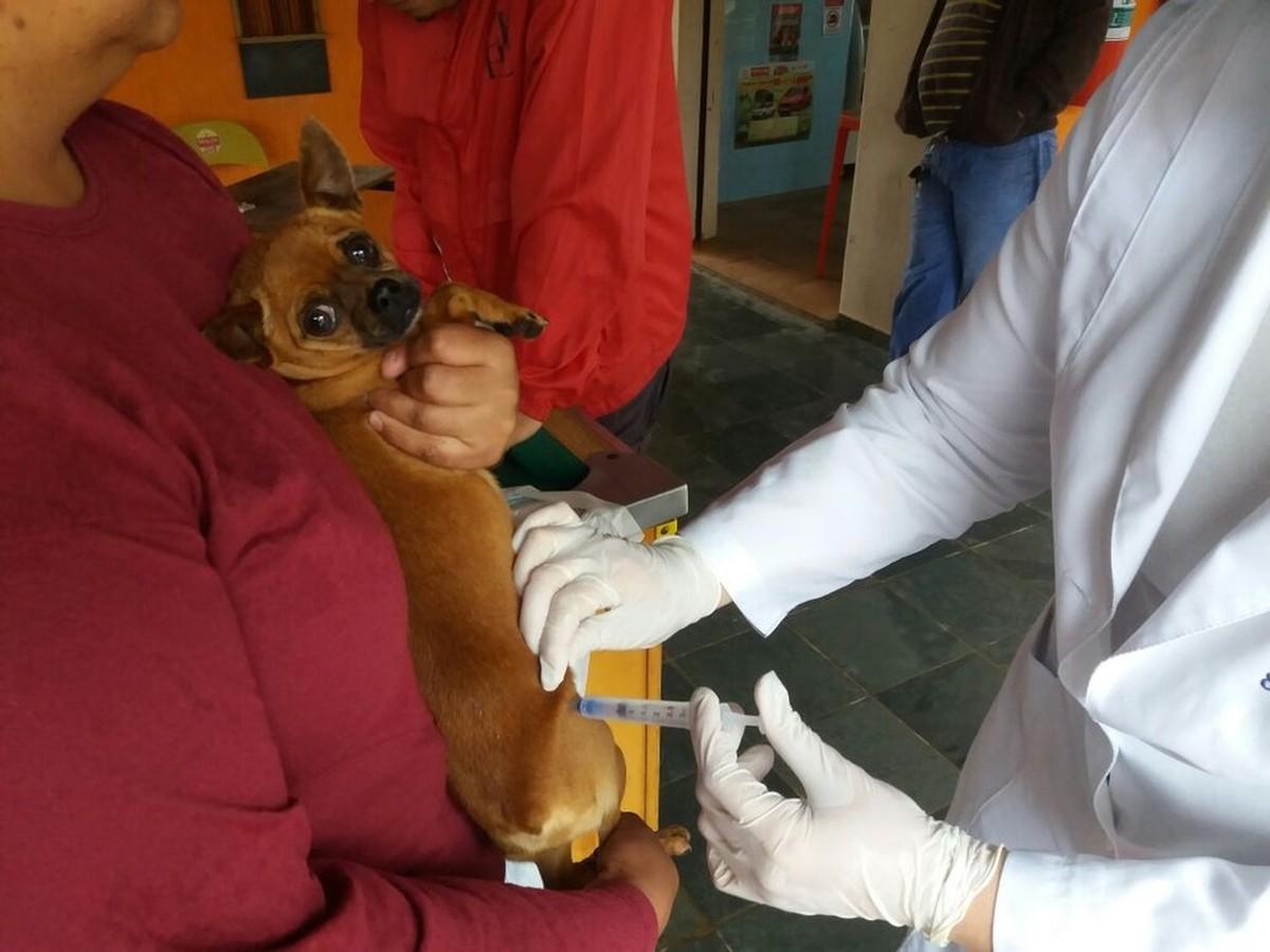 Imunização contra a raiva em cães e gatos é realizada na área rural de Quissamã, no RJ