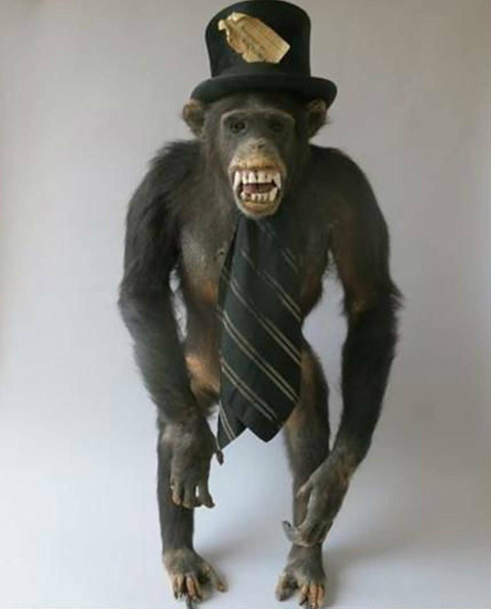 Chimpanzé de chapéu foi um dos animais empalhados roubados (Foto: Metropolitan Police )