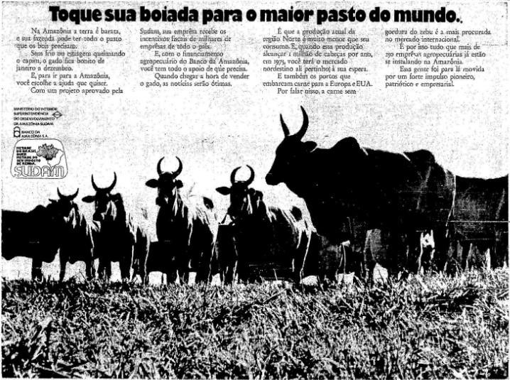 Por que tem tanto gado na Amazônia?