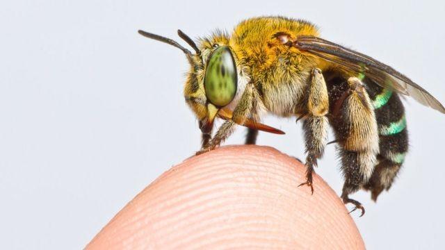 As revelações do primeiro mapa global de abelhas (e por que é tão importante) thumbnail