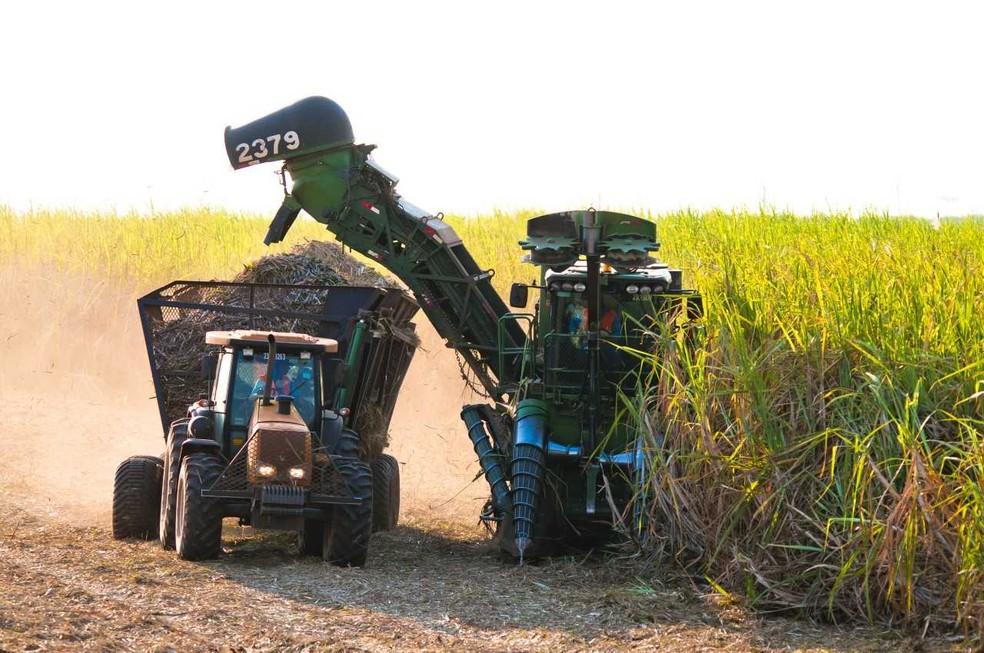 Usinas de todo o país devem processar 10 milhões de toneladas a mais de cana em 2019, segundo Datagro — Foto: Biosul/Divulgação