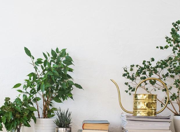 Acertar a quantidade ideal de água para cada planta exige paciência e observação constante (Foto: Thinkstock)