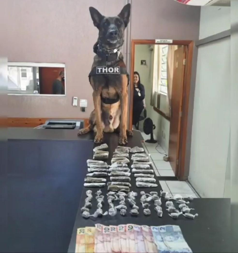 Thor, durante seus seet anos de serviço na Polícia Militar, ajudou na apreensão de mais de 3 toneladas de drogas — Foto: Baep Piracicaba/Divulgação