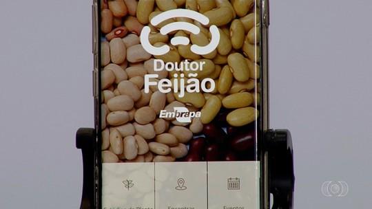 Embrapa lança aplicativo para ajudar produtores no cultivo do feijão