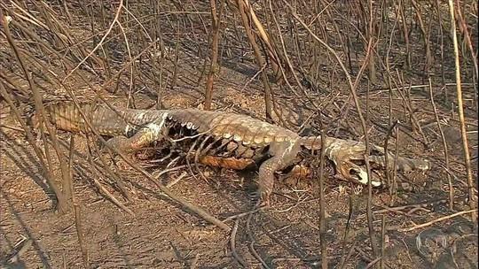 Produtores rurais perdem plantios e animais com queimadas