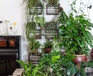 7 plantas adequadas para ter em vasos dentro de casa