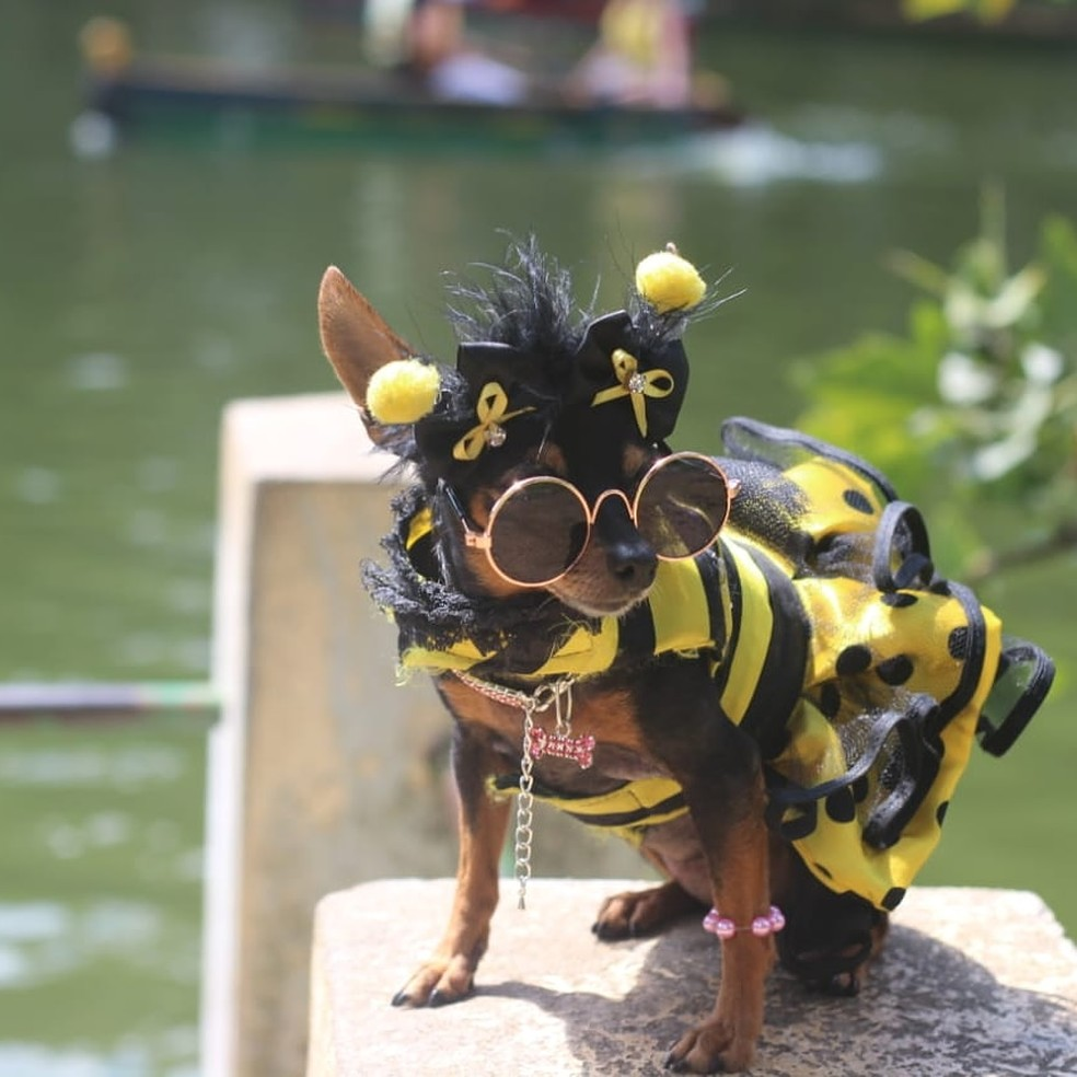 Minimi vestida de abelhinha já venceu concursos de fantasia.  — Foto: Adna Rocha/Arquivo pessoal