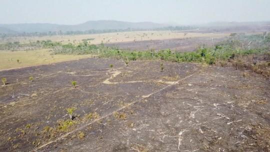 Pacheco: Amazônia tem aumento de alertas de desmatamento e produção do lixo nas cidades