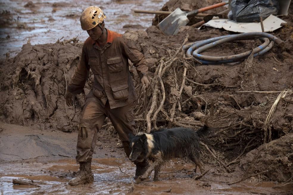 19 cães farejadores ajudam nas buscas neste domingo em Brumadinho. Foto mostra atuação dos animais com bombeiros nos primeiros dias do mês — Foto: Mauro Pimentel/AFP