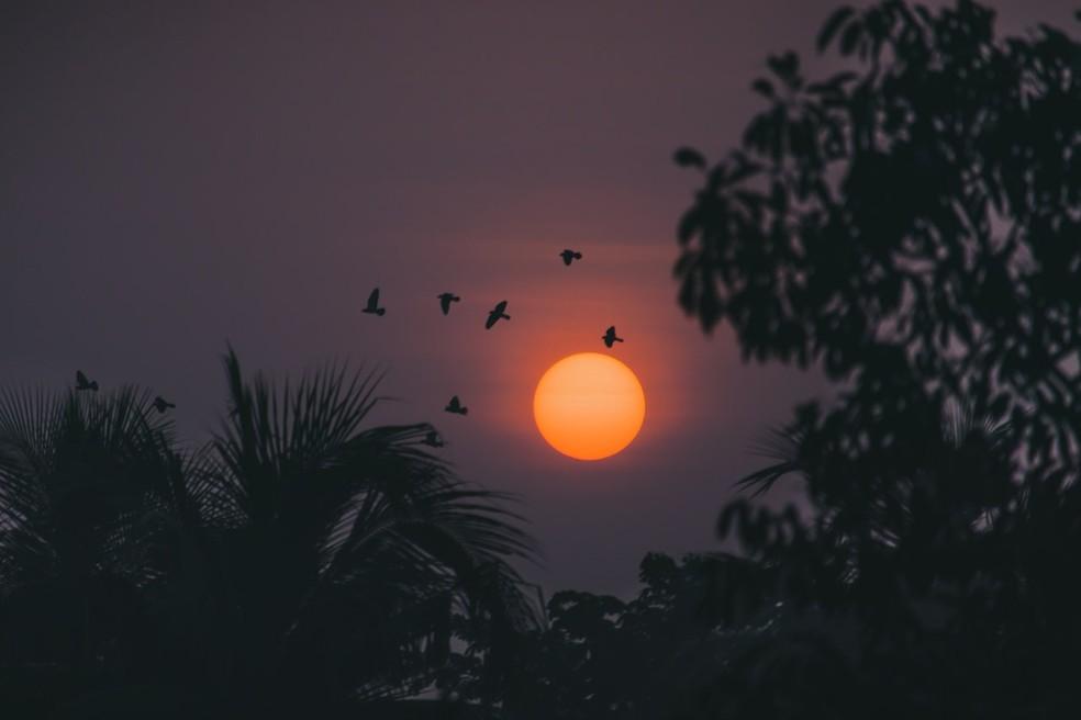 Descoberta de Parisi se aplica a grupo de passarinhos voando — Foto: Pexels