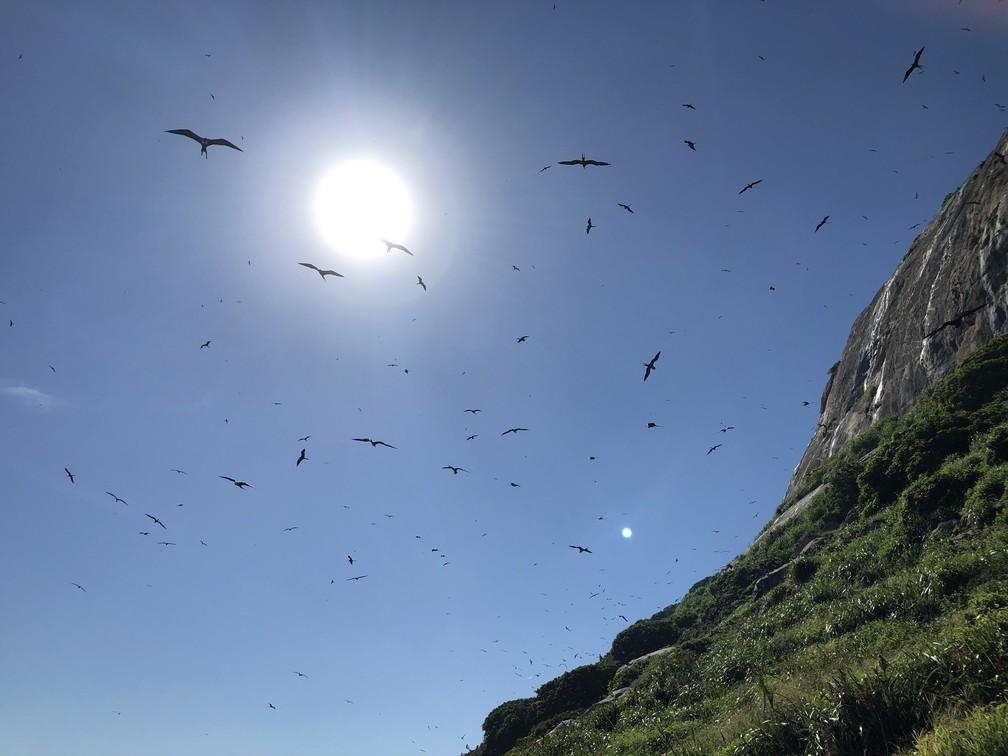 O Arquipélago das Cagarras é um dos maiores santuários de aves marinhas do Brasil. — Foto: Carlos Brito