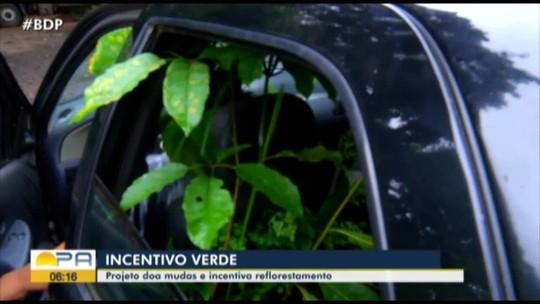 Projeto de doação de mudas ajuda a recuperar floresta em Marabá