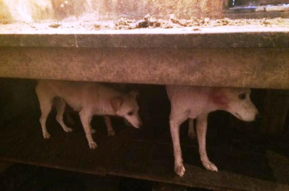 Cães estão em situação de abandono em cidade do Vale do Ribeira (Foto: Divulgação/GPA)