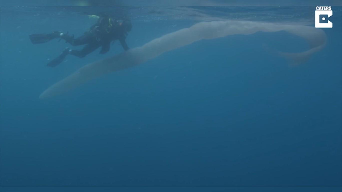 Os pyrosomas são encontrados nem águas profundas e quentes (Foto: Reprodução/Steve Hathaway)