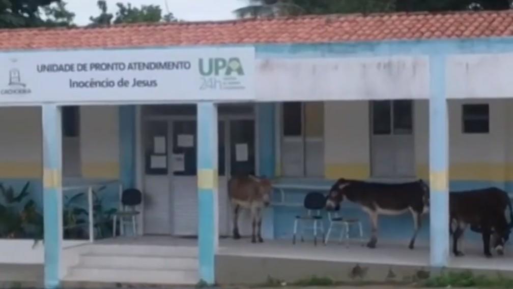 UPA 24h é fechada e jegues invadem varanda no recôncavo baiano — Foto: Divulgação/TV Bahia